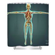Human Body Showing Skeletal System Shower Curtain