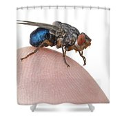 Human Botfly Belize Shower Curtain