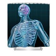 Human Skeleton And Brain, Artwork Shower Curtain