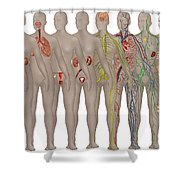Human Systems In The Female Anatomy Shower Curtain