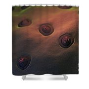 Human Taste Buds Shower Curtain