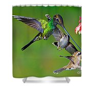 Hummingbirds At Feeder Shower Curtain