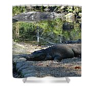 Hungry Gator Shower Curtain