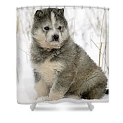 Husky Dog Puppy Shower Curtain