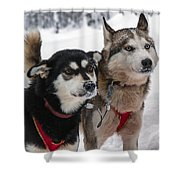 Husky Dogs Pull A Sledge  Shower Curtain by Lilach Weiss