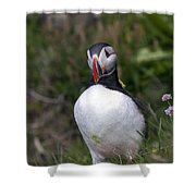 Icelandic Puffin Shower Curtain