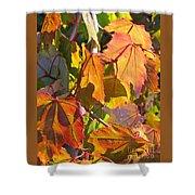 Illumining Autumn Shower Curtain