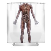 Internal Human Anatomy Shower Curtain