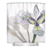 Iris Evolution Shower Curtain
