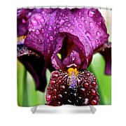 Iris Tongue Shower Curtain