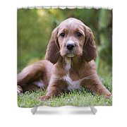 Irish Setter Puppy Shower Curtain