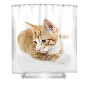 Isolated Ginger Kitten Shower Curtain