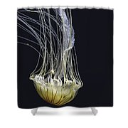 Jellyfish Of Aquarium Of The Bay San Francisco Shower Curtain