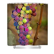 Jewel Tones Shower Curtain by Jean Noren