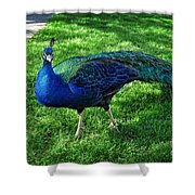 Jimmy The Peacock Shower Curtain