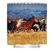 Joe's Horses Shower Curtain