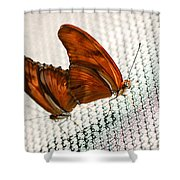 Julia Heliconian Dryas Julia Shower Curtain