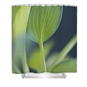 June Plantain Lily Close Ups Shower Curtain