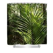 Jungle Ferns Shower Curtain
