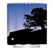 Juniper Tree At Dawn Shower Curtain