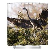 Juvenile Blue Heron Shower Curtain