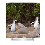 Juvenile Nz Yellow-eyed Penguins Or Hoiho On Shore Shower Curtain