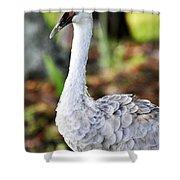 Juvenile Sandhill Crane Grus Canadensis Pratensis II Usa Shower Curtain