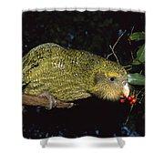 Kakapo Feeding On Supplejack Berries Shower Curtain