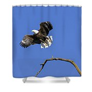 King Of The Sky 4 Shower Curtain