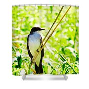 Kingbird Shower Curtain