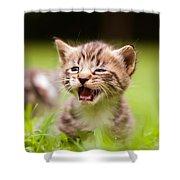 Kitty In Grass Shower Curtain