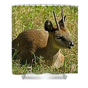 Klipspringer Antelope Shower Curtain
