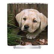 Labrador Puppy Shower Curtain