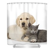 Labrador Puppy With Chartreux Kitten Shower Curtain