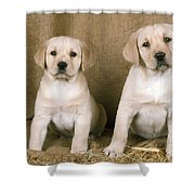 Labrador Retriever Puppies Shower Curtain