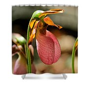 Lady Slippers At Moore State Park 2 Shower Curtain