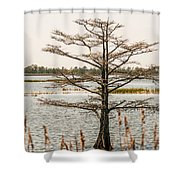 Lake Mattamuskeet Nature Trees And Lants In Spring Time  Shower Curtain