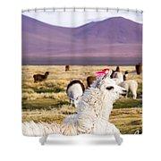 Lama On The Laguna Colorada In Bolivia Shower Curtain