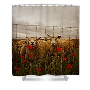 Lambs Shower Curtain