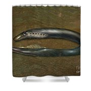 Lamprey Eel, Illustration Shower Curtain
