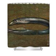 Lamprey Eel, Illustration Shower Curtain