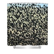 Large Flock Of Blackbirds And Cowbirds Shower Curtain