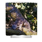 1 Large Grey Squrriel Shower Curtain