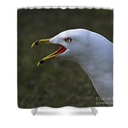 Larus Delawarensis... Shower Curtain