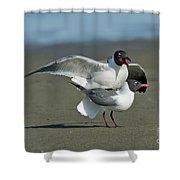 Laughing Gulls Shower Curtain