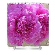 Lavender Carnations Shower Curtain
