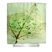 Leaf With Green Drops Shower Curtain