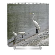 Learning To Fish Shower Curtain