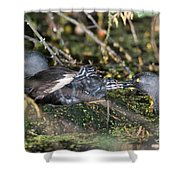 Least Grebe Shower Curtain
