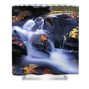 Leaves In Little River Great Smoky Shower Curtain